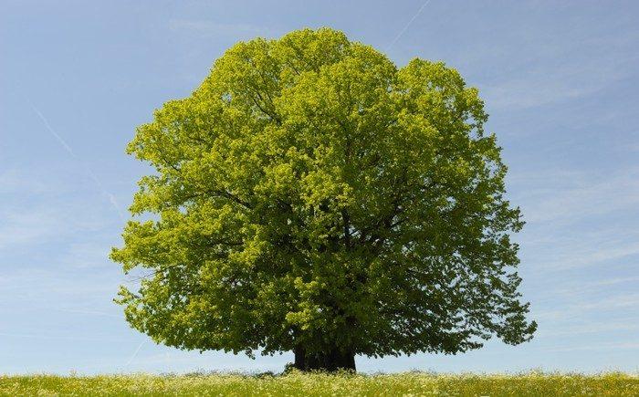 Interessantes über Bäume