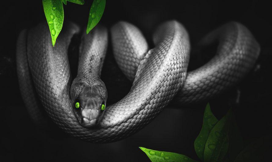 Die Schlange – geschickter Jäger ohne Krallen