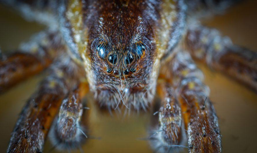 Die Spinne klein aber Oho